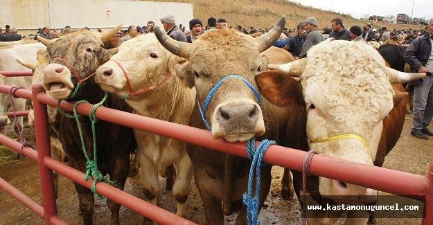 Kastamonu'da 21 bin 509 baş hayvan kesimi yapıldı