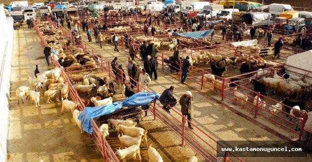 Kastamonu hayvan pazarı açıldı