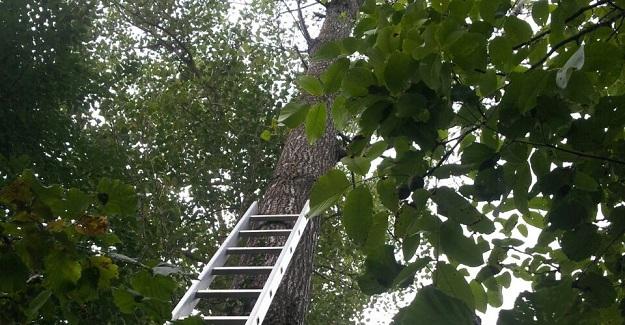 Kavak ağacından düştü, hayatını kaybetti