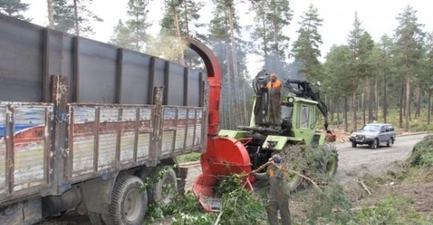 Orman gençleştirme çalışmalarında ekonomiye katkı