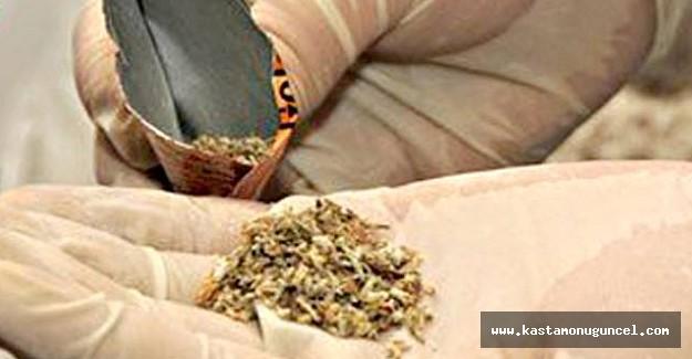 Kastamonu'da 15 gram bonzai ele geçirildi