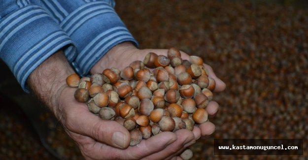 Kastamonu'dan pazara 264 ton fındık indi