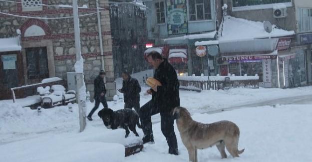 Aç kalan sokak köpeklerini vatandaşlar besledi