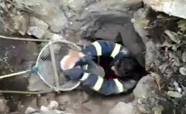 6 metrelik su kuyusuna düşen kediyi, itfaiye kurtardı