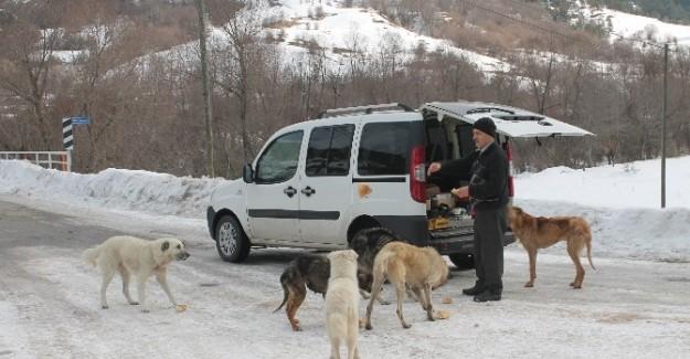 Köpekler için her gün 50 km. yol gidiyor