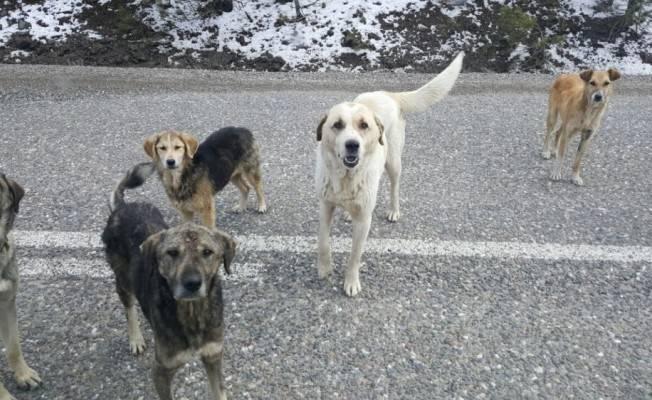 Sokak köpekleri açlığa terkedildi