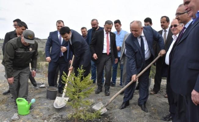 Azdavay'da maden sahaları ağaçlandırılıyor
