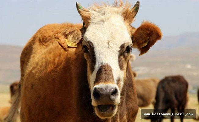 Hindistan'da, inekler için ayrı bir bakanlık kurulacak