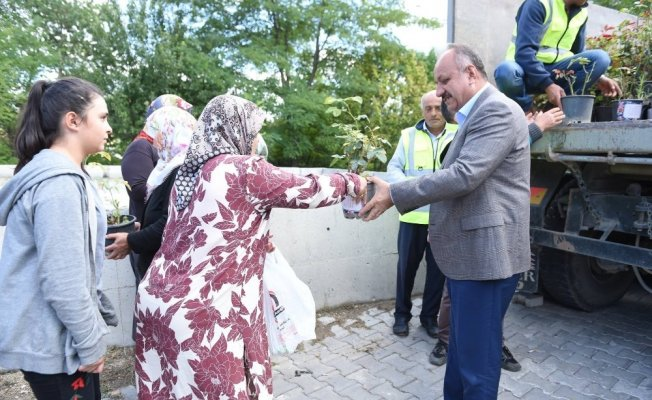 Kastamonu Belediyesi, 3 bin 500 gül fidesi dağıttı