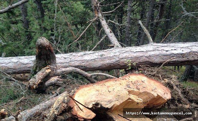 Kestiği ağaç üstüne düşen adam öldü