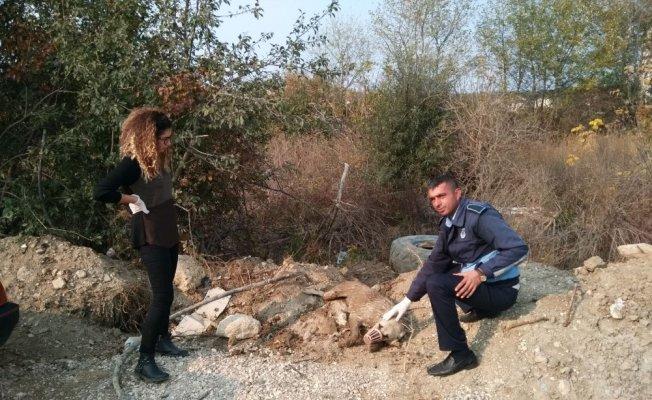Su kuyusuna düşen köpeği işçiler kurtardı