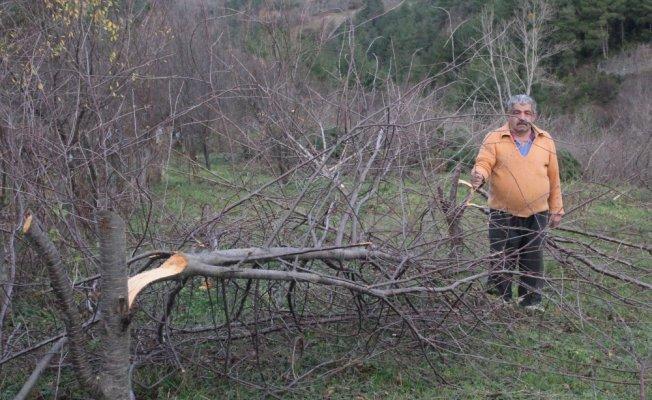 Bahçeden 80 ağacın kesildiği iddiası